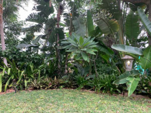 Modjadji Estate Gardens